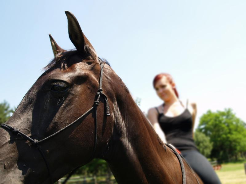 What's the view like from your high horse?